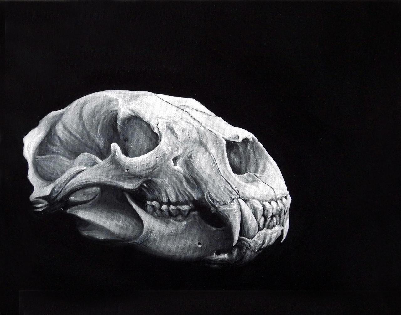 Bear Skull Art – Articleblog info