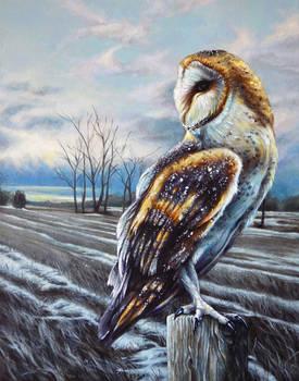 Barn Owl, February Sunrise