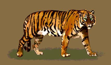 Tiger Guy