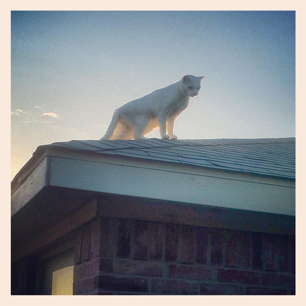 cat on a cool shingle roof by thetaoofchaos