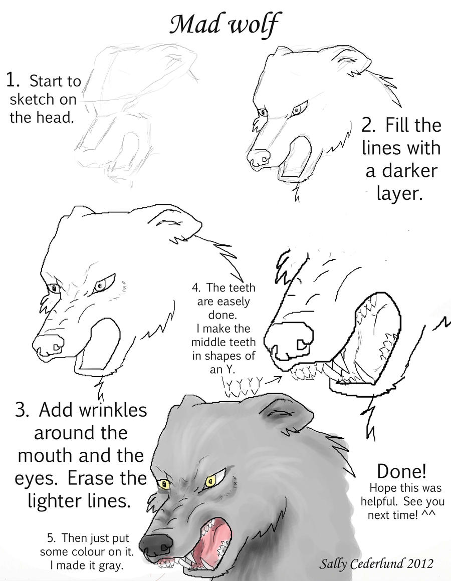 How To Draw A Mad Wolf In My Way By Sallyce