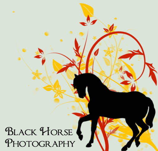 wallpaper of friesian horse. Current Residence: Indiana; Interests: horses, friesians, crafts.