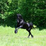Black Stallion Stock