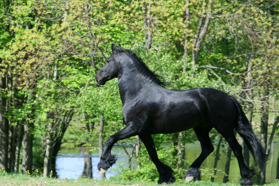 Friesian Stock 2010 by LarissaAllen