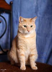 Cat Portrait by LarissaAllen