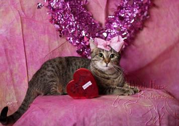 Kitty Boudoir by LarissaAllen