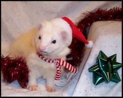 Merry Christmas, Ferret Style by LarissaAllen