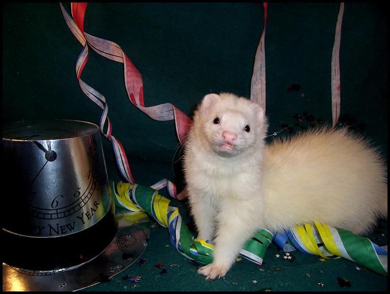 Happy New Year, ferret style. by LarissaAllen