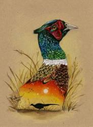 Ring-necked Pheasant by autumn-rains