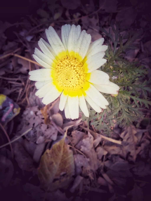 flowerr by oceansigh