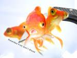 Retarded Fish Don't Bleed