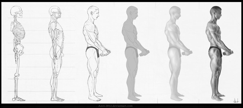 Anatomy studying - 1st day by Azot2018 on DeviantArt