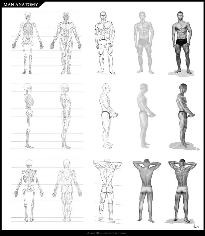 Man Anatomy by Azot2021