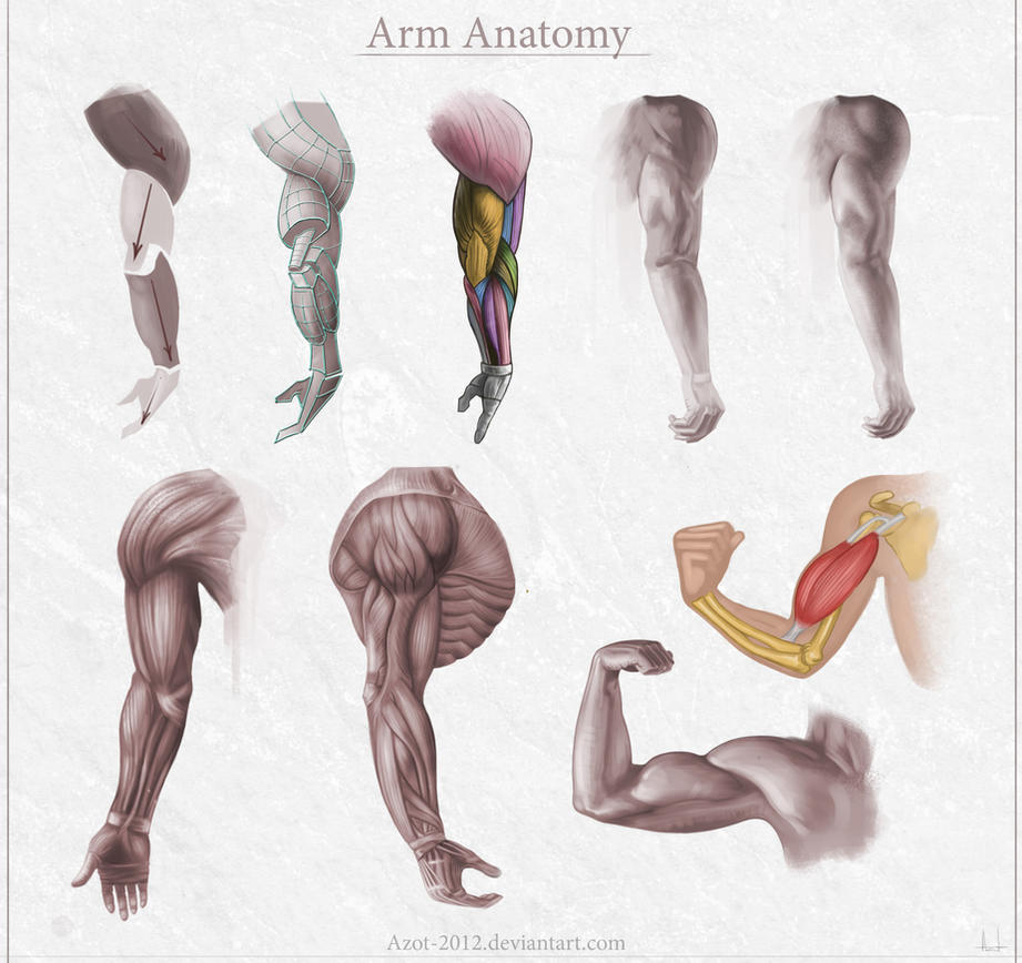 Arm Anatomy By Azot2018 On Deviantart