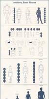Anatomy Basic Shapes by Azot2019