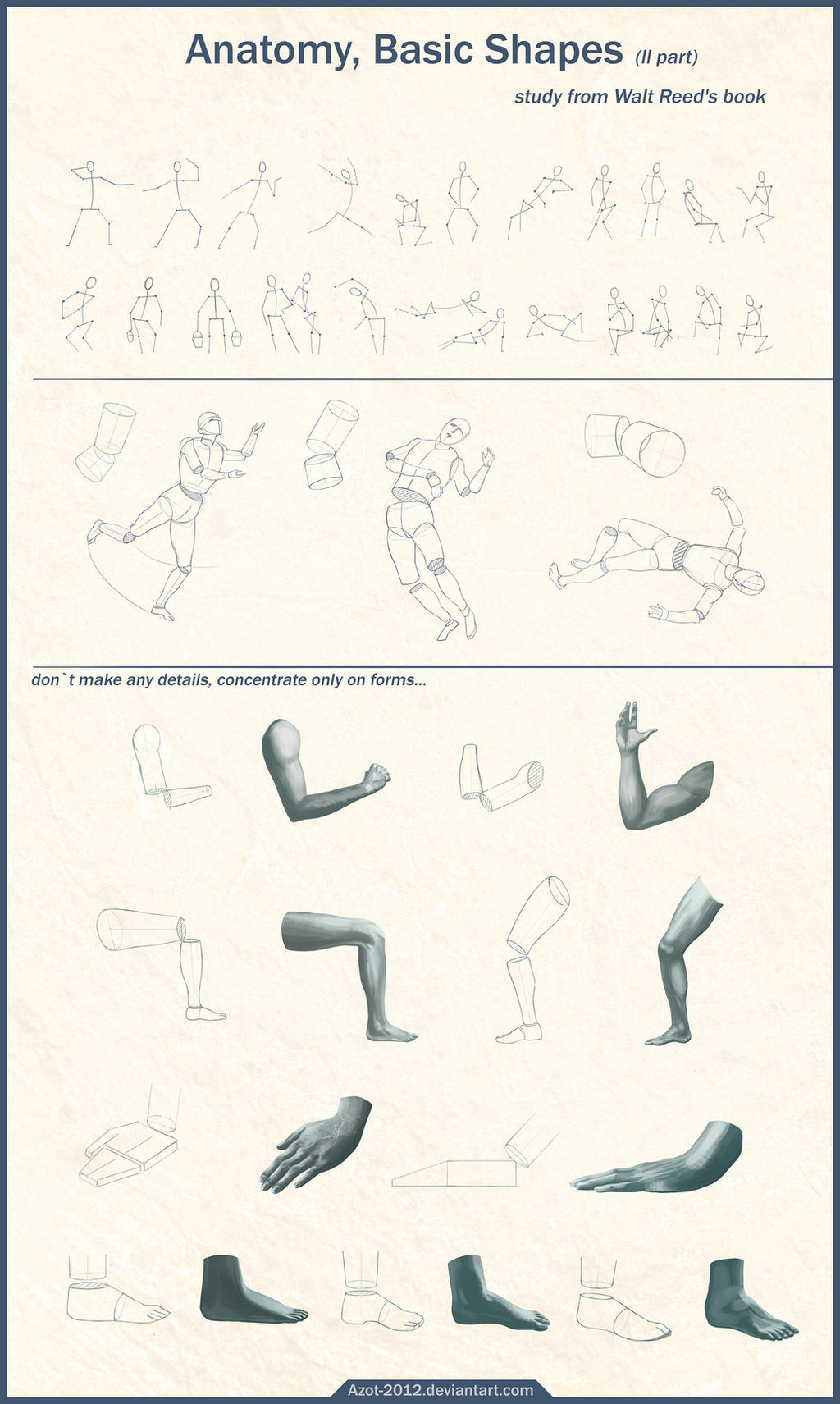 Anatomy Basic Shapes ll part by Azot2016