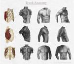 Trunk Anatomy