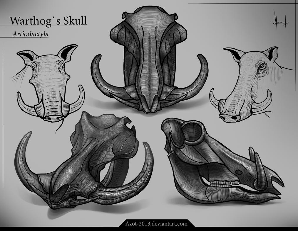 Pin Warthog Skull Tattoo 67548jpeg on Pinterest