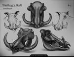 Warthog`s Skull