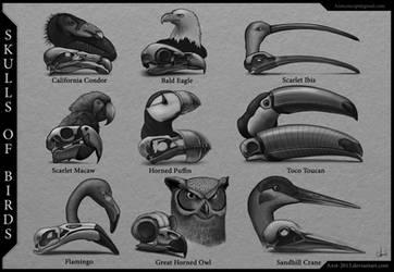 Skulls of Birds
