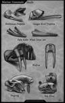 Marine Mammals` Skulls
