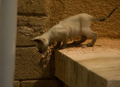La petit chat de Rabat