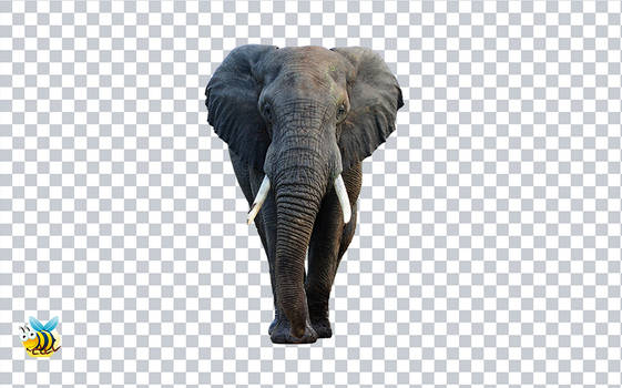Elephant face png