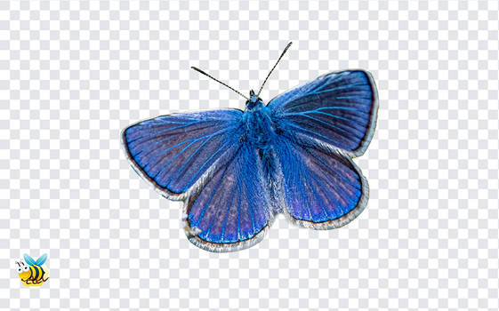 Mazarine Blue Butterfly PNG