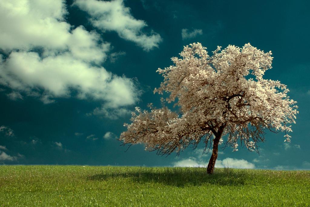 infrared tree no.3