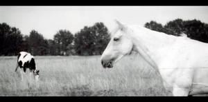 -horse s4-