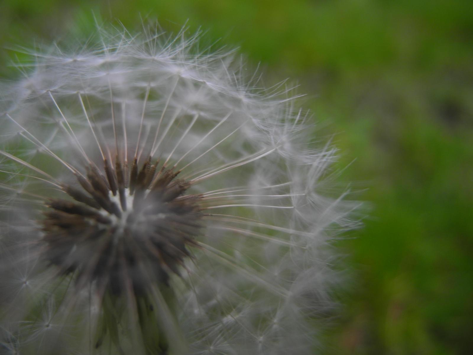 make a wish by imma flower child on DeviantArt