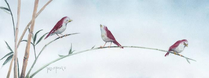 I'm Not an Early Bird by whiteflyinglizard