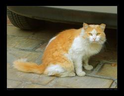 Alley Cat by tsofli