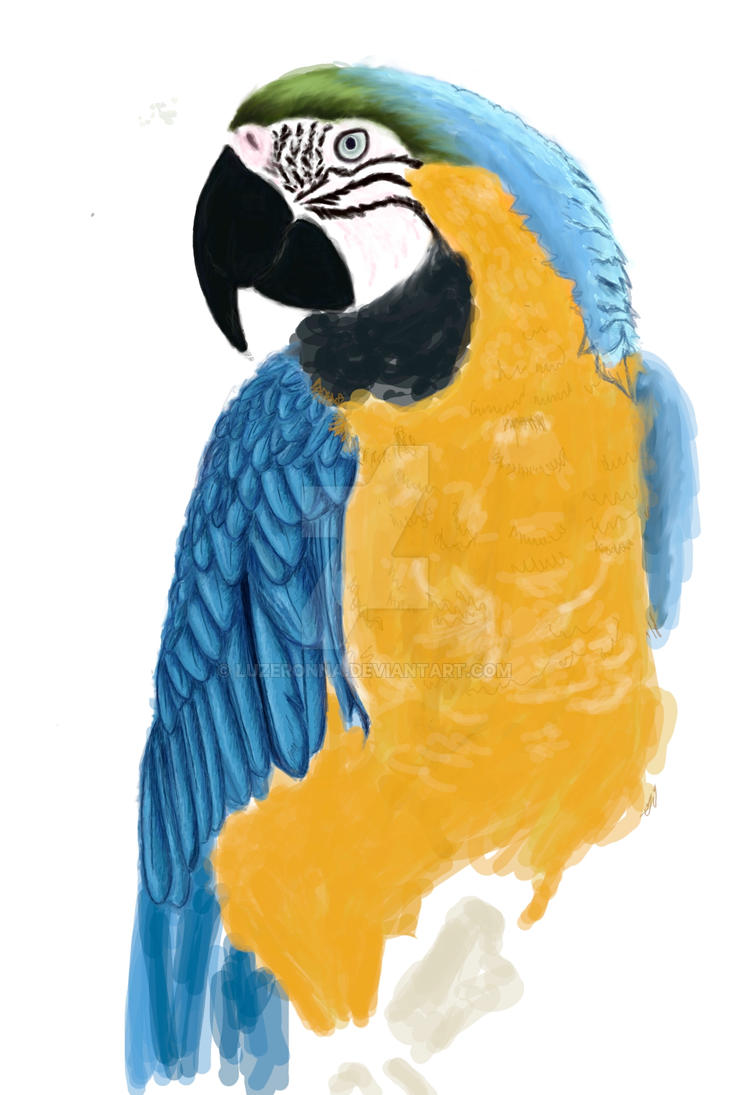 Blue and Gold Macaw in progres by Luzeronna