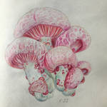 Mushrooms Colored Pencil Drawing