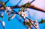 Spring III