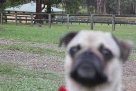 This dog is ready to kill who ever is taking this  by DoctorPeguin