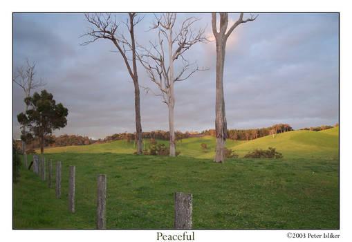Three trees, green hills