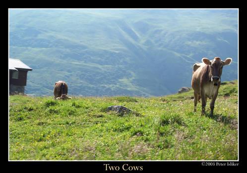 twocows