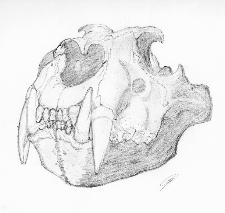 Lion Skull By Worldboneclub On Deviantart