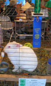 Trophy Rabbit