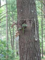Tree Knot by steward