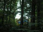 Pavilion Through Trees