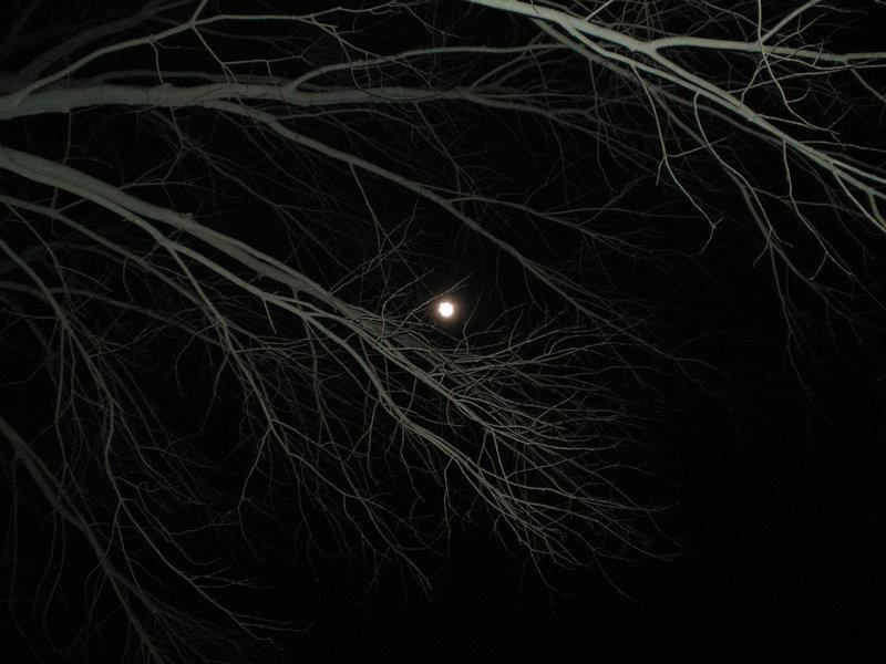 March 26: Light by steward