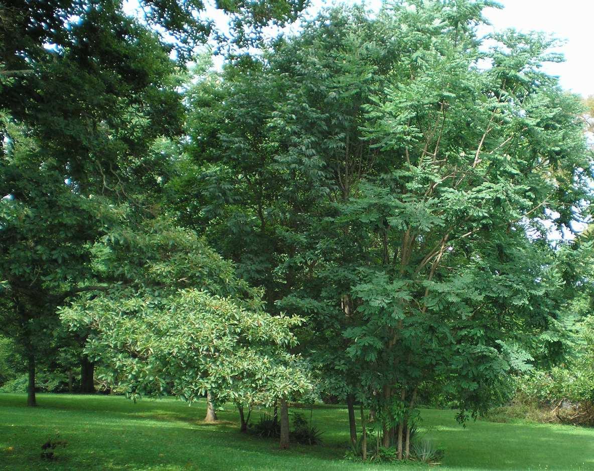 SHWC2006: Mansion Front Lawn 2 by steward