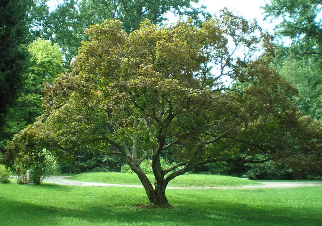 SHWC2006: Mansion Front Lawn 3 by steward