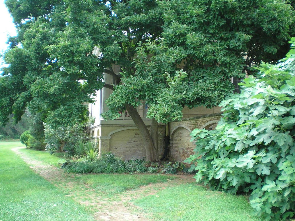 SHWC2006: Mansion Rear Area by steward