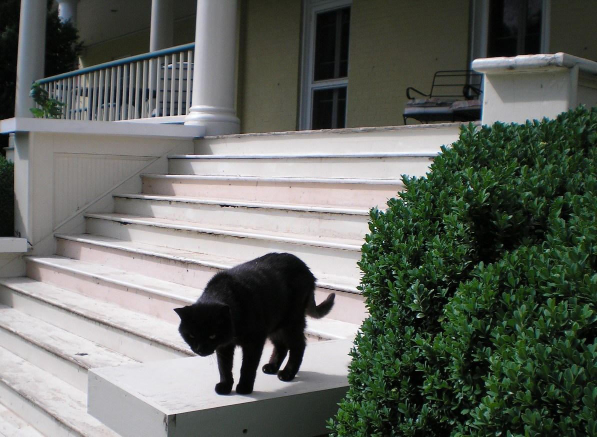 SHWC2006: Cat on Guard by steward
