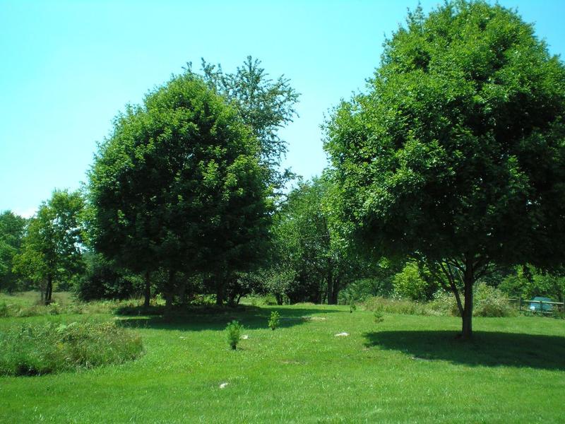 SHWC2006: More Lawn by steward