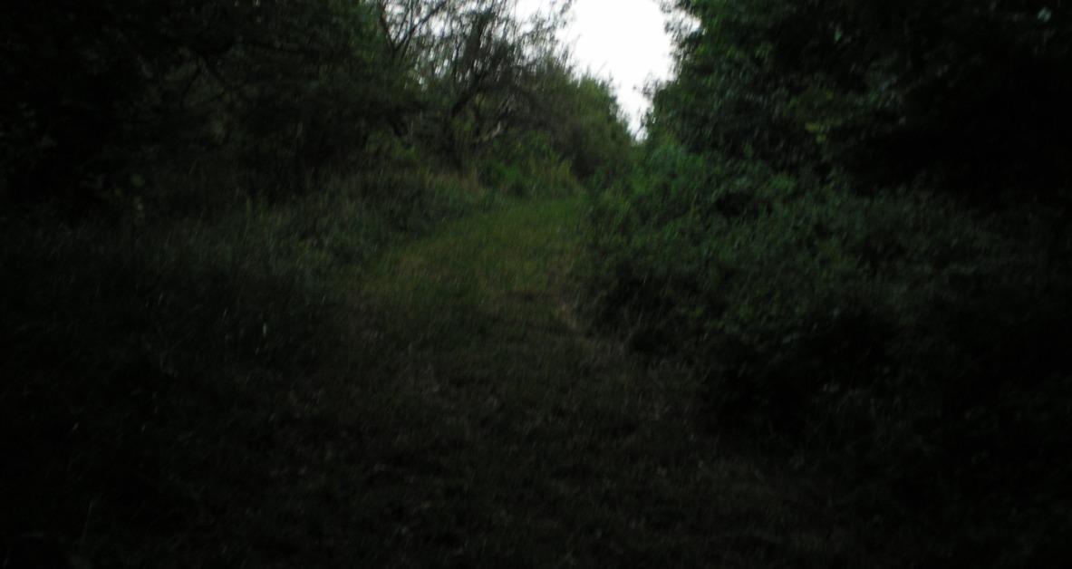 SHWC2006: Path grows Blurred by steward